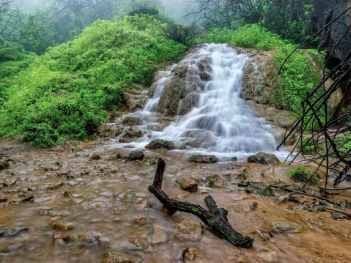 The entire region is lush during the Khareef season